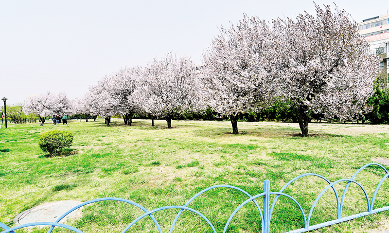 气温回升,桃河公园内春意盎然、百花齐放