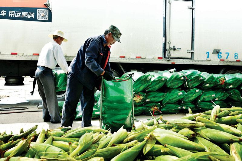鲜食玉米出山记