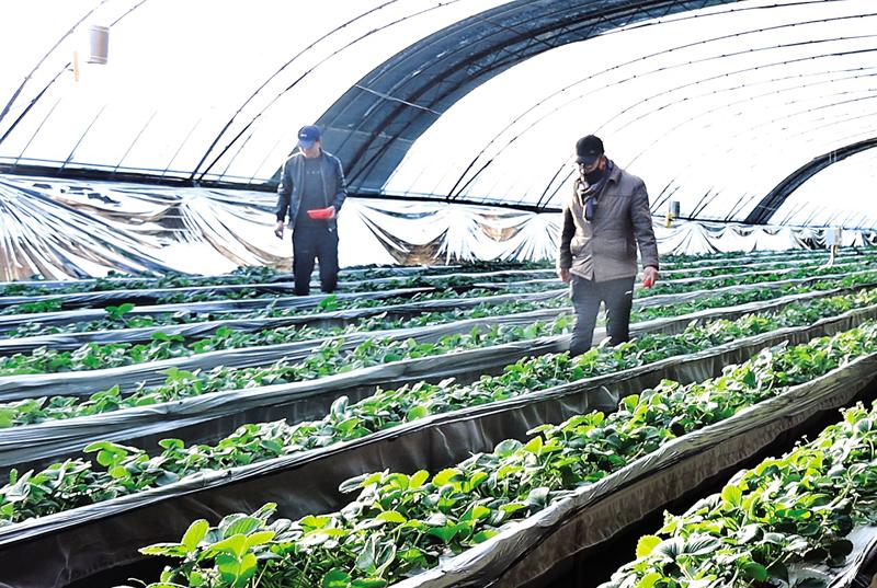 盂县绿园农业开发有限公司:科技助力 蔬果飘香